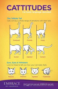Are you one of many that would love to have cat behavior explained? We have lots of infographics that will teach you how to recognize important signs.