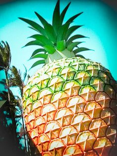 Big things | The Big Pineapple #sunshinecoast #triplejroadtrip Beautiful Places In The World, Beautiful Beaches, Big Pineapple, Cool Photos, My Photos, On The Bright Side, Tourist Trap, Coast Australia, Roadside Attractions