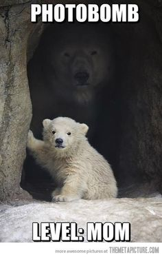 Polar photobombing…