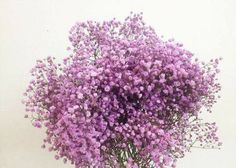 Gypsophila Elegans, Baby Flower, Pretty Flowers, Grass, Bloom, Beautiful, Babies Breath, Flower Shops, Anime