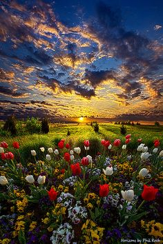 Sunrise on The Meadow