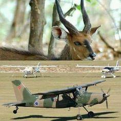 South African Air Force, Apartheid, War Machine, Giraffe, Military, Animals, Animais, Animales, Animaux