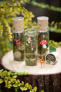 Woodland Whimsy, anyone? We're positively enchanted with these #DIY terrariums!