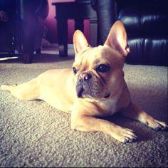 @Bri Anne Minerd's pup. the cutest dog in the interwebz.