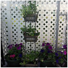 CD Tower Turned Herb Garden High-Rise