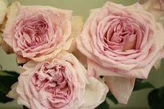 O'Hara roses..... Drooooool
