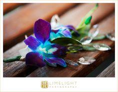 #weddings #weddingphotography #weddinginspiration #weddingday #weddingdress #tuxedo #bride #groom #aquarium #floridaaquarium #tampa #florida #love #limelight #limelightphotography