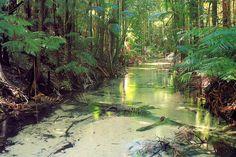 Wanggoolba Creek Central Station Fraser Island - K'Gari (Aboriginal Name) - © All Rights Reserved - Black Diamond Images