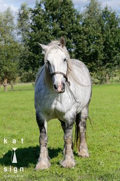 Meet Chloë by Katsign.... all rights reserved by Katsign - commercial use is not okay but feel free to share :-) - www.katsign.be - www.facebook.com/... - #katsign