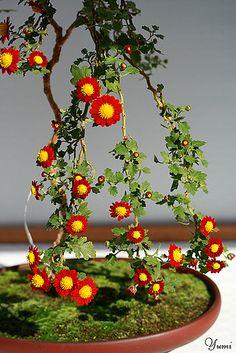daisy bonsai by * Yumi *, via Flickr