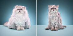 #wet #cat