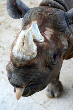 Rhino raspberries!   by ~stuijn....Please...I need a 3 lb. ribeye...don't bring me lettuce!!