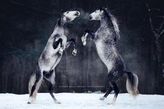 Photographer Captures The Raw Beauty And Power Of Majestic Horses : LittleBudha.com