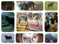 Buddy my Catahoula who rescued me.