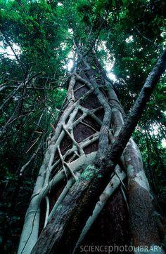 Lamington National Park, Queensland, Australia.