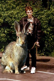 Harry Potter Going to Prom with a Giant Bunny Rabbit