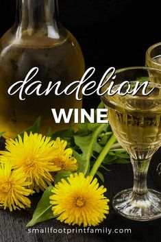 Don't spray those dandelions! This dandelion wine recipe uses ginger and cloves, which I think give it a nice touch. If you have lots of dandelions around, give it a try! #realfood #fermentation #naturalhealth #naturalliving #recipe #gardening #foraging #permaculture #homesteading #dandelion