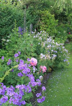 Geraniums, Roses, Alchaemila Mollis, Alliums and Delphiniums in a mixed border