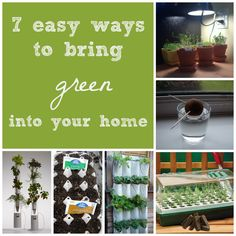 7 Easy Ways To Bring Green Into Your Home
