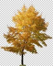 texture tree leaves alpha masked