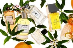 Orange Blossoms As the citrus tree flowers, consider dotting your wrist with its sweet perfume Blossom Perfume, Summer Scent, Citrus Trees, Orange You Glad, Secret Recipe, Orange Blossom, Smell Good, Perfume Bottles, Fragrance