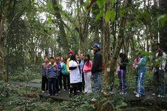 Trilha no bosque. Jovens da Vila Parolin visitam o Museu de História Natural - Álbum - Prefeitura de Curitiba