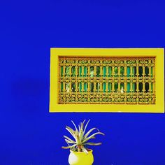 The gardens of Jardin Majorelle. Marjorelle Blue as shot by Martin Solly from…