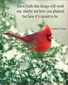 Wise and Beautiful Words! Pretty Birds, Beautiful Birds, Meaningful Quotes, Inspirational Quotes, Motivational Quotes, Life Quotes, Faith Quotes, Qoutes, Cardinal Birds