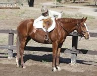 How much longeing is too much for a young horse? by Alyssa Pitts | Practical Horseman