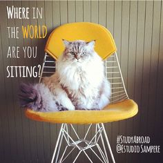 With all the students that have shared experiences at Estudio Sampere, it's always nice to know where they are now. So, fun question of the day:  Where in the world are you sitting? Comment and let us know    (Image: Sam Grawe - Instagram.com/grawesome)