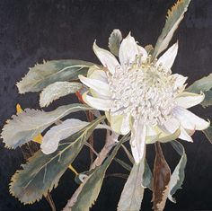 "huariqueje: "" White Waratah-Cropped - Cressida Campbell, n/d Australian, b.1960- Carved woodblock, hand painted in watercolour pigment , 51.5 x 57.0 cm block """