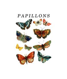 Papillons Butterfly Vintage T Shirt aesthetic Papillons Butterfly Vintage T Shirt For Men Women aesthetic collage Butterfly Illustration, Butterfly Drawing, Vintage Prints, Vintage Posters, Butterfly Shirts, Butterfly Quotes, Arte Sketchbook, Photo Wall Collage, Animal Wallpaper