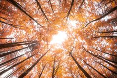 Autumn all above me by DanielWohlleben. Please Like http://fb.me/go4photos and Follow @go4fotos Thank You. :-)