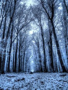 A long way home - A winter walk in the forrest in Vienna, by Judith Staniek...