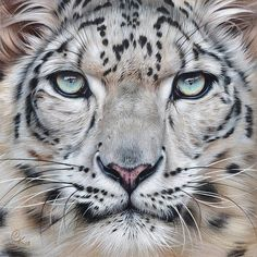 Faces of the Wild - Snow Leopard Print by Elena Kolotusha