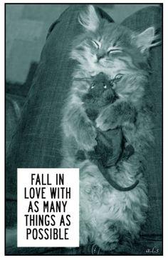www.facebook.com/KittysFunnies