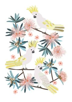 Australian Birds Sulphur Crested Cockatoo Giclee Art Print Bird Illustration, Botanical Illustration, Cartoon Drawings, Art Drawings, Australian Birds, Cockatoo, Bird Prints, Bird Art, Retro Vintage