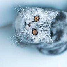 Marvelous Cat Photography