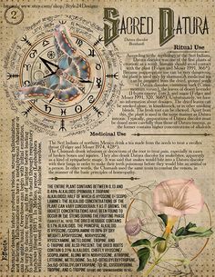 Sacred Datura 2 Book of Shadows page Ritual Poisonous Plants Green Witchcraft, Magick Spells, Wiccan, Pagan Witchcraft, Magic Herbs, Herbal Magic, Hedge Witch, Witch Spell, Poisonous Plants