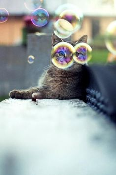 bubbles!   ...........click here to find out more     http://googydog.com