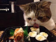 困った猫ちゃんだニャー