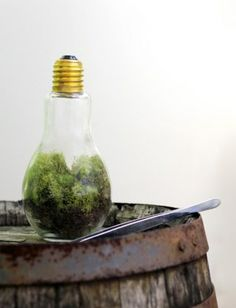 DIYer Gift Guide: BRIGHT IDEA DIY TERRARIUM KIT #custom gifts, #diy gifts, #gift ideas