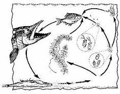 animaux de l'eau