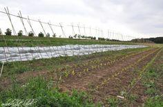 amberlight-label: Besuch auf dem Schellehof / Solidarische Erntegemeinschaft Vineyard, Outdoor, Summer Solstace, Harvest, Outdoors, Vine Yard, Vineyard Vines, Outdoor Games, The Great Outdoors