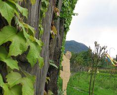 Home      ReiseNotizen      Veggiewelt      WeltVerbesserung      FaireRessourcen      My Posts in English South Tyrol, World, Viajes