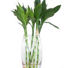 vaso bambu da sorte - Pesquisa Google
