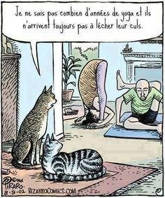 Les chats et le yoga