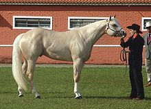 Palomino - a light palomino. This shade is at the lighter end of the color  range for a Palomino horse, but as the eyes and skin are dark, the horse is not a cremello.