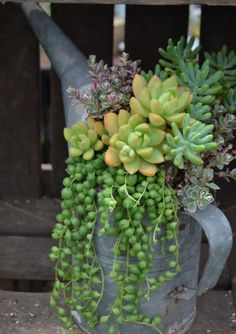 Cute planter idea for succulents