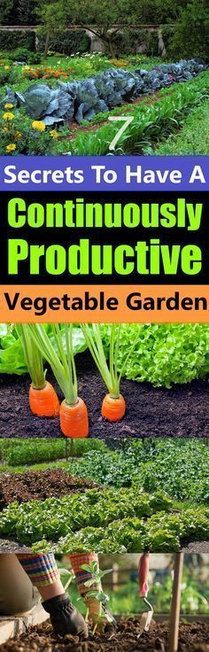 Secrets To Have A Continuously Productive Vegetable Garden Don't you want a garden that will not only produce a bountiful harvest of fresh vegetables but also produce them continuously?Don't you want a garden that will not only produce a bountiful harvest Garden Types, Veg Garden, Fruit Garden, Edible Garden, Lawn And Garden, Garden Plants, Vegetable Gardening, Terrace Garden, Veggie Gardens